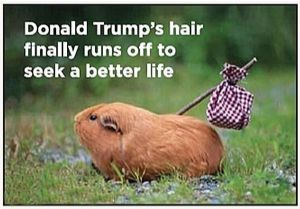 Donald Trump's Hair Finally.. funny fridge magnet  (ep)